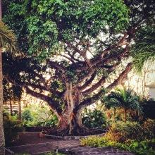 nelson-wedding-tree